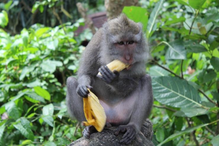 acualquierparte_Monkey_Forest.JPG